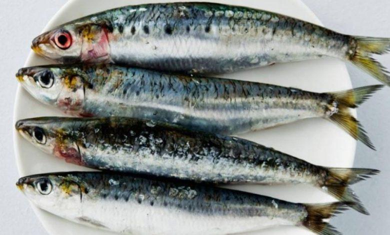3 أنواع من الأسماك تحارب الاكتئاب